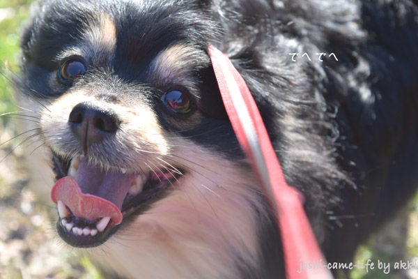 dog_smile_1