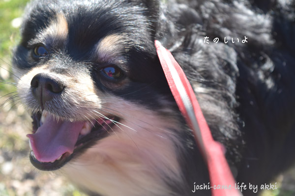 dog_smile_2