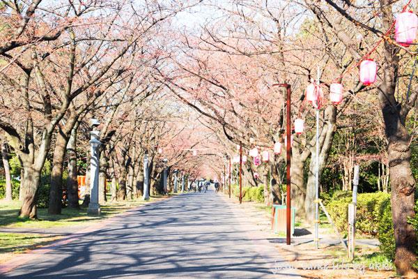 park_sakura
