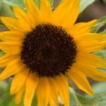 ベランダ緑化 真夏の花達