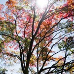 登山日記: 2015/10/25 御岳山〜日の出山〜つるつる温泉