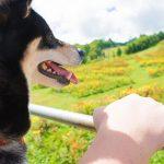 犬連れ旅行 夏の軽井沢 2日目