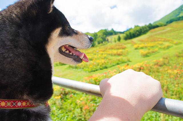 dog_lift